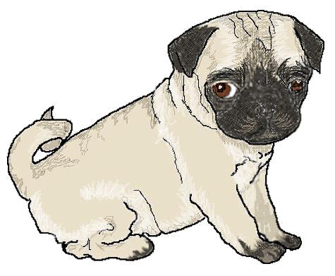 clip art transparent stock Pug clipart. Free cliparts download clip.