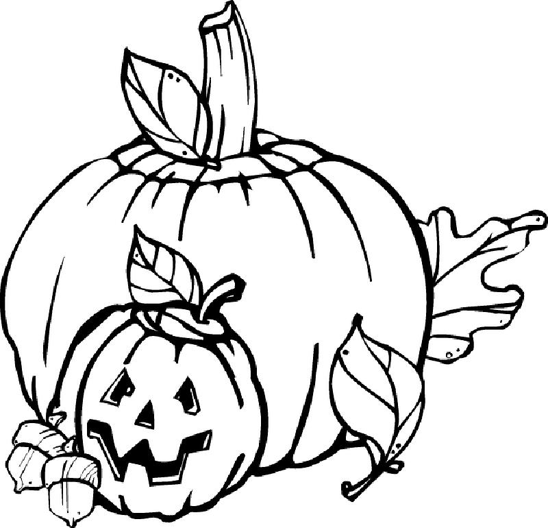 free Pumpkin Plant Drawing at GetDrawings