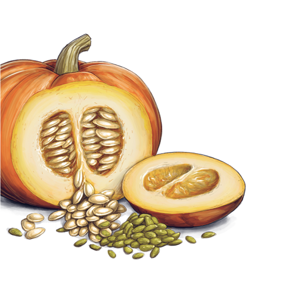clipart library stock Pumpkin Seeds PNG Transparent Images