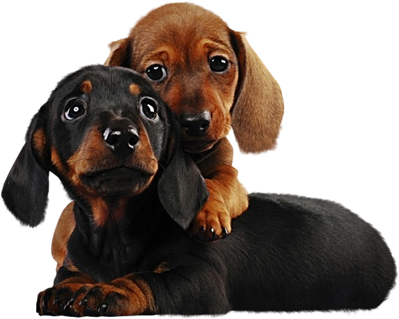 download Two cute png gallery. Puppies clipart