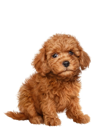 clip art library library drawing puppy cavoodle #95439929