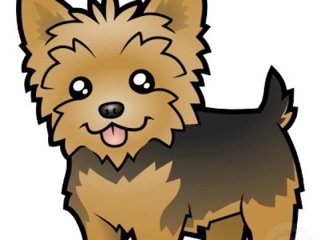 graphic library Free yorkies download clip. Puppies clipart yorkie poo