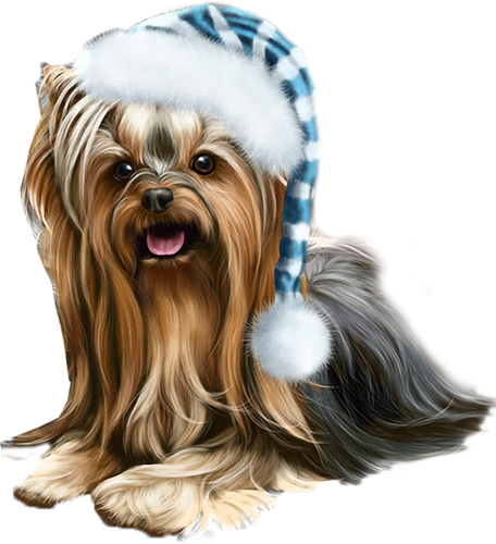 jpg library library Puppies clipart yorkie poo. Pic png pinterest yorkies