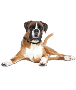 svg black and white stock Boxer Puppies
