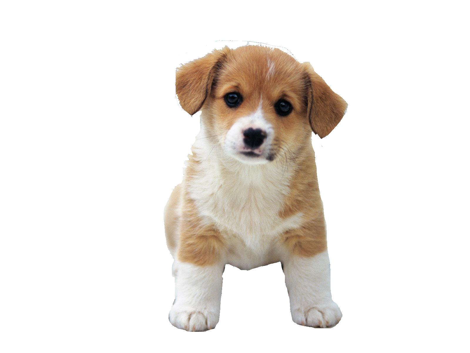 image puppies transparent cute #101824899