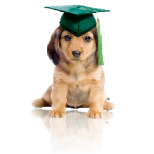 library puppy transparent graduate #101857449