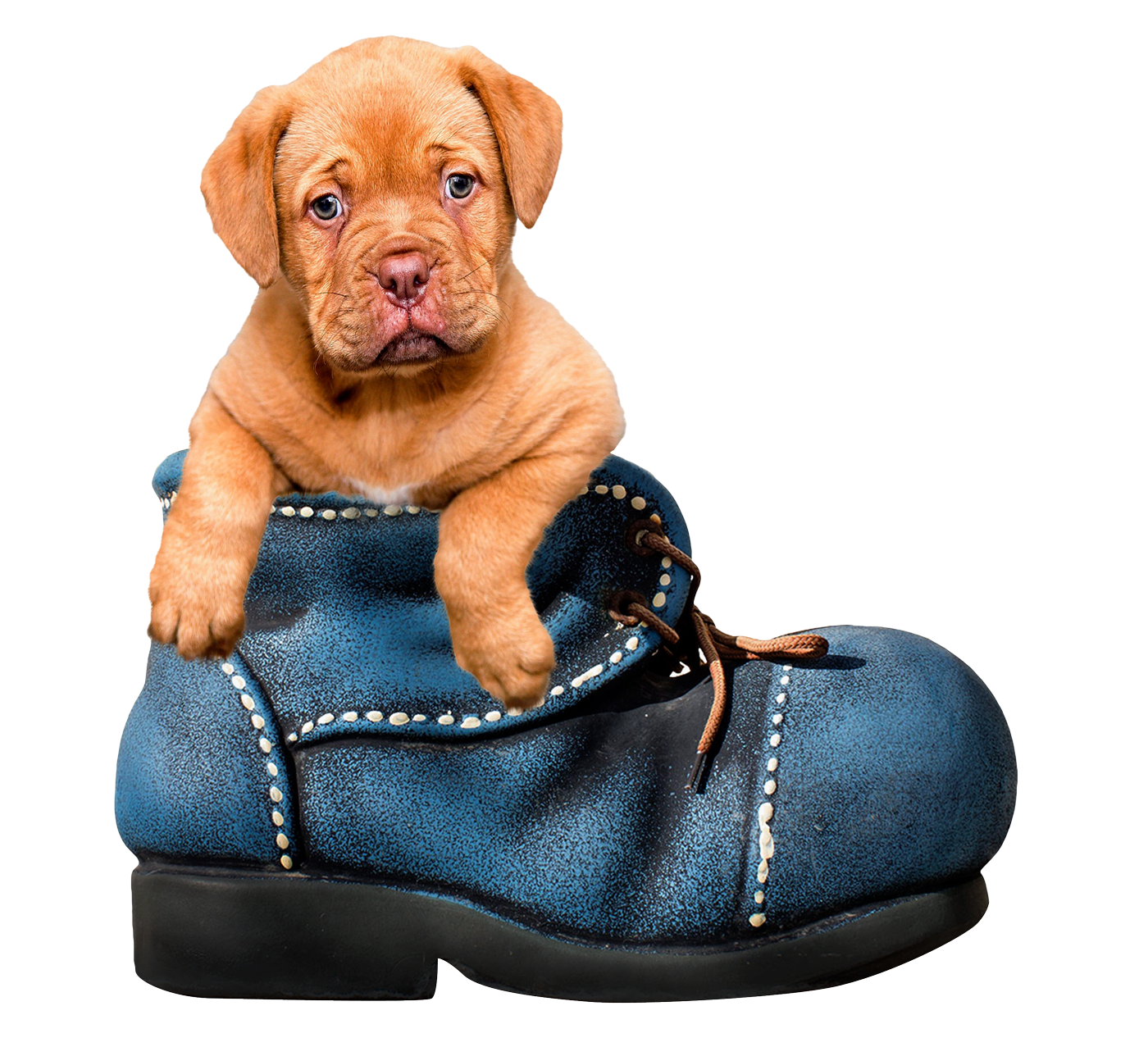 clip freeuse stock Puppy Dog PNG Image