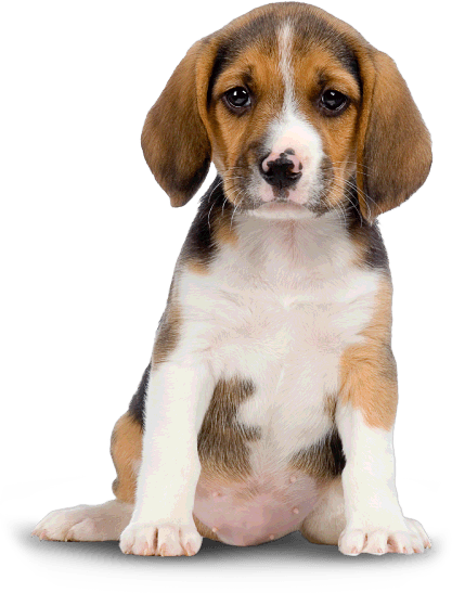 png free Small Dog Puppy transparent PNG