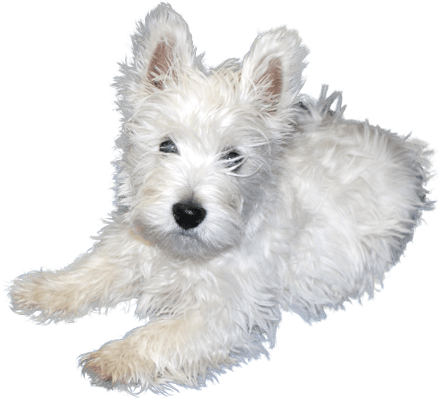 clip royalty free library White Puppies Free PNG Image