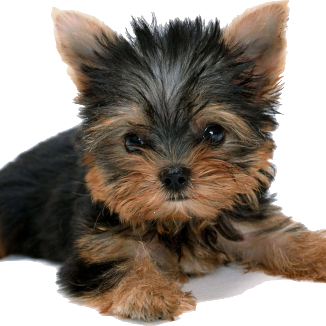 picture freeuse download ShePuppy