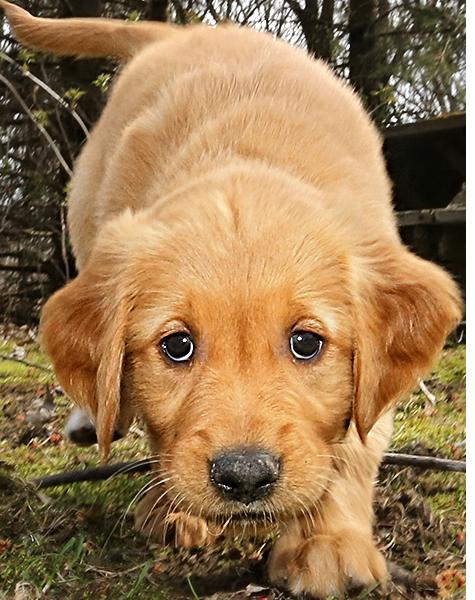 clip freeuse download Special images jwpictures png. Puppy transparent