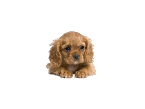 clipart black and white library transparent puppy