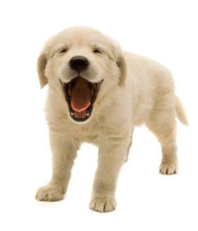clipart free download Puppy transparent. Isolated photos of search