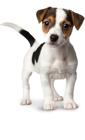 clip art royalty free library Dog kennel hotel daycare. Puppy transparent small