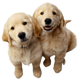 png freeuse library puppy transparent two #101859757