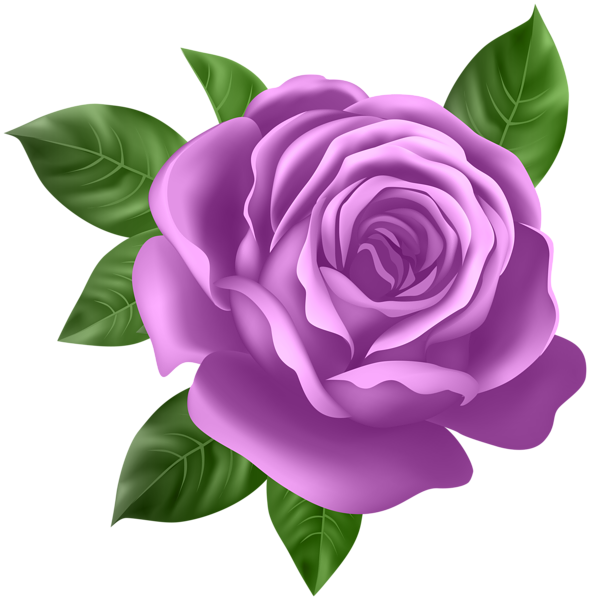 clip art freeuse Purple Rose Transparent PNG Clip Art