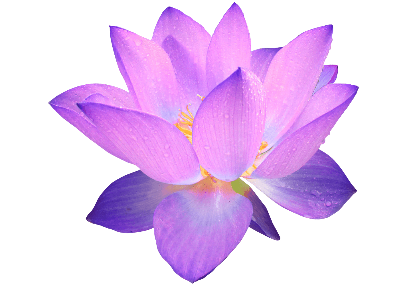vector freeuse download Purple Flower transparent PNG