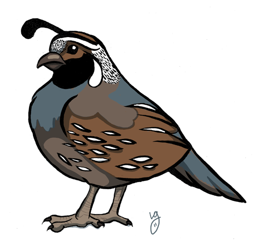 graphic black and white Cartoon drawings to draw. Quail clipart.