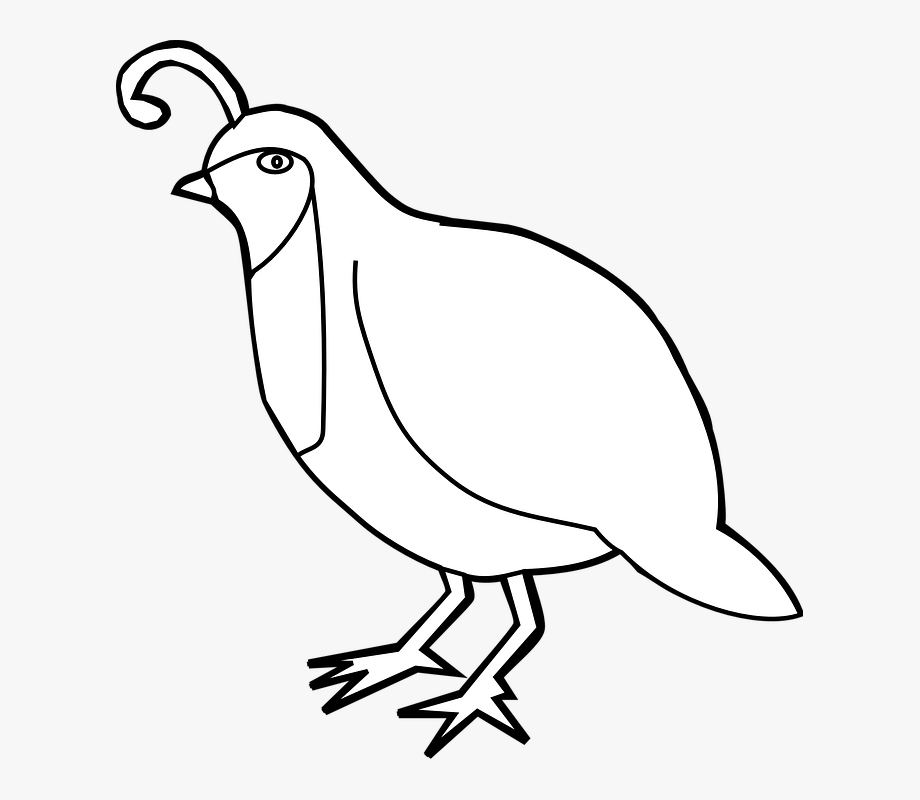 png Black and white free. Quail clipart.