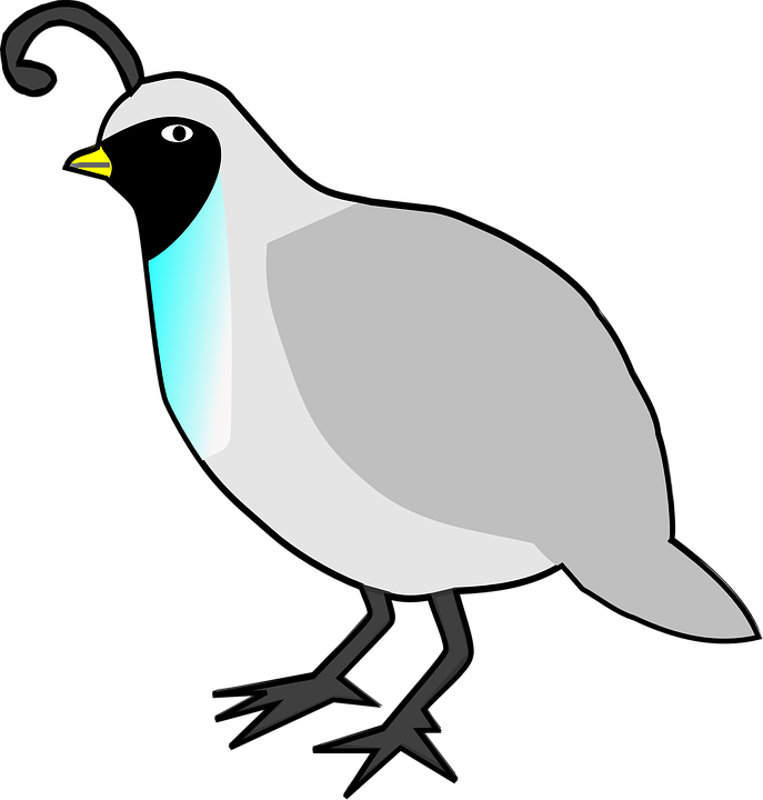 vector library library Quail clipart. Bird free on dumielauxepices.