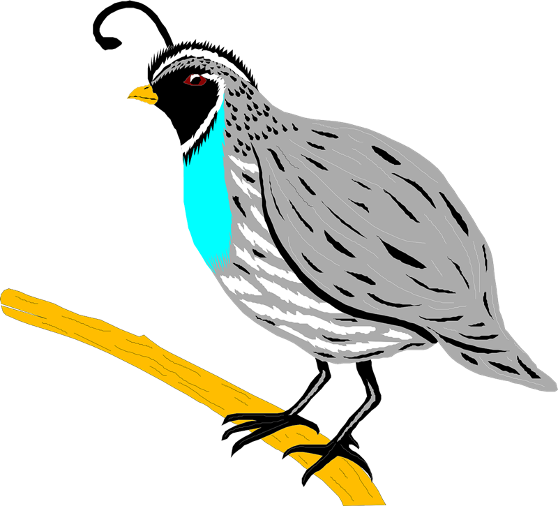 jpg free library  collection of free. Quail clipart.