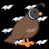 clip art stock Quail clipart. Brown standing pinterest quails.
