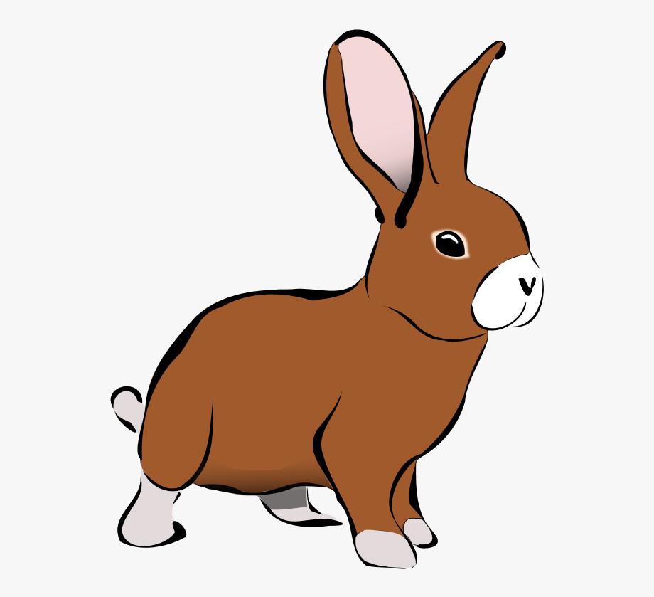 banner download Bunnies clipart wild rabbit. Animals png free .