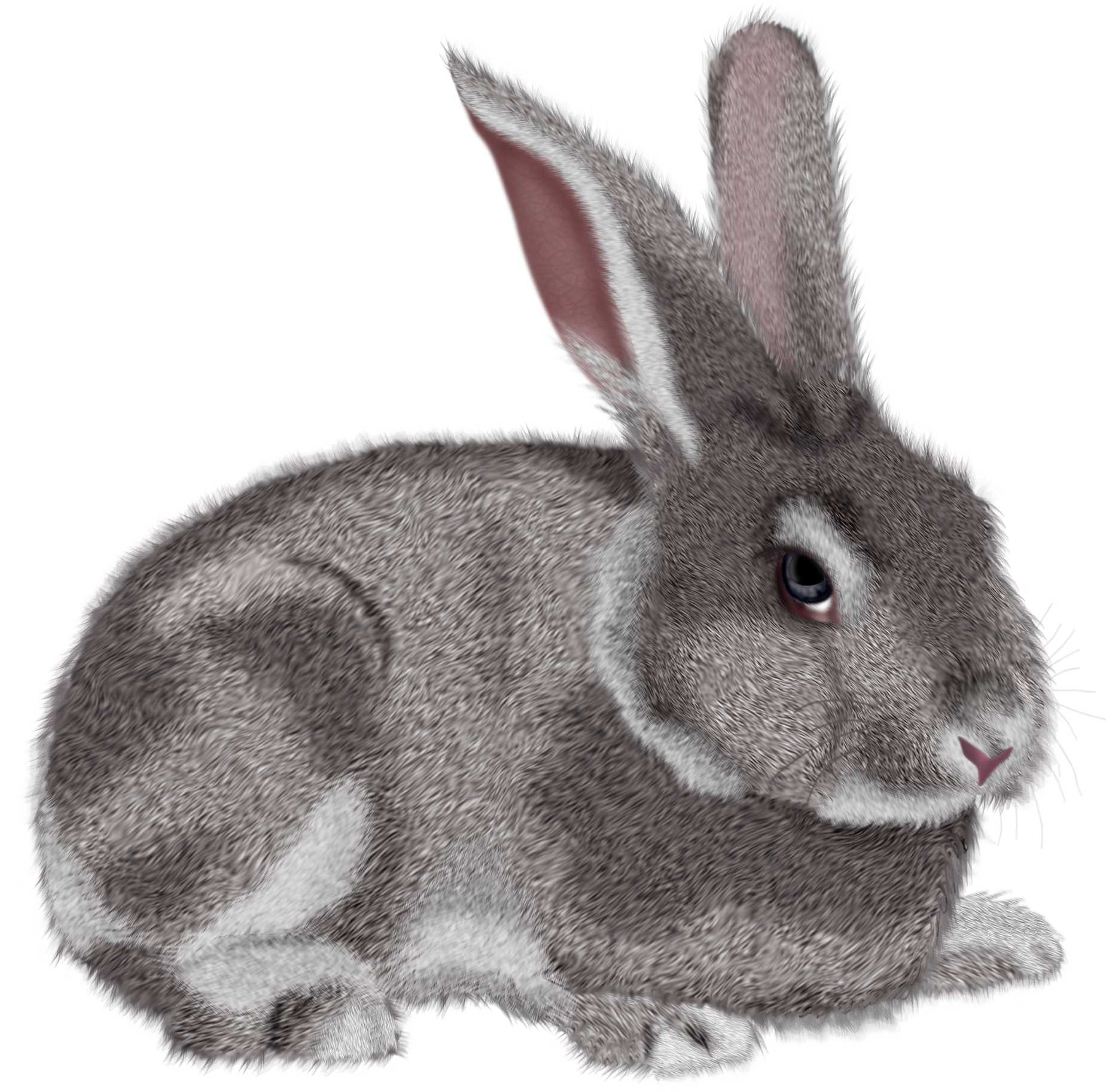 transparent stock Grey png picture gallery. Bunnies clipart wild rabbit.