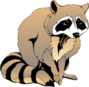 banner freeuse download Racoon clipart. Raccoon clip art at.