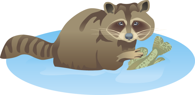 jpg royalty free stock Free Raccoon Clipart