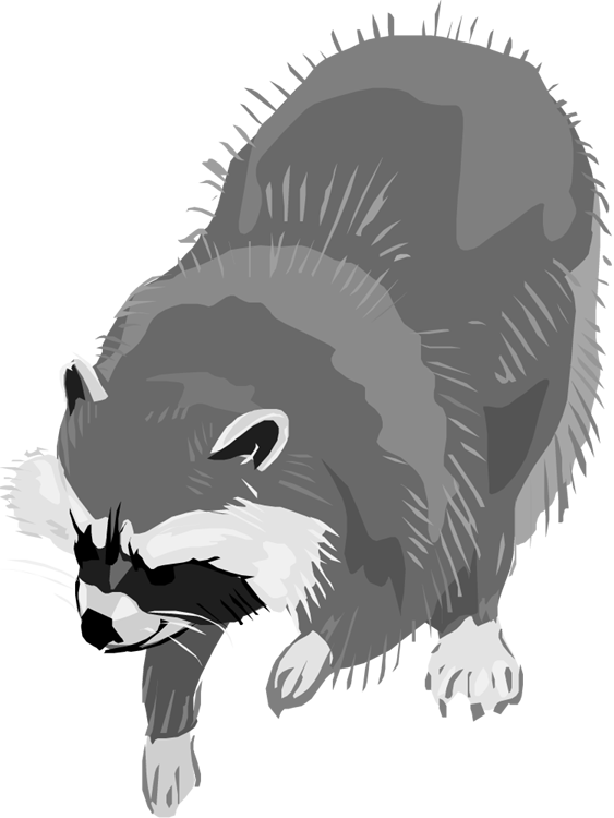 clip art black and white stock Free raccoon. Racoon clipart.