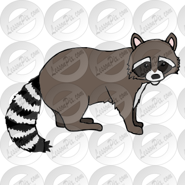 png transparent download Racoon clipart. Raccoon picture for classroom.