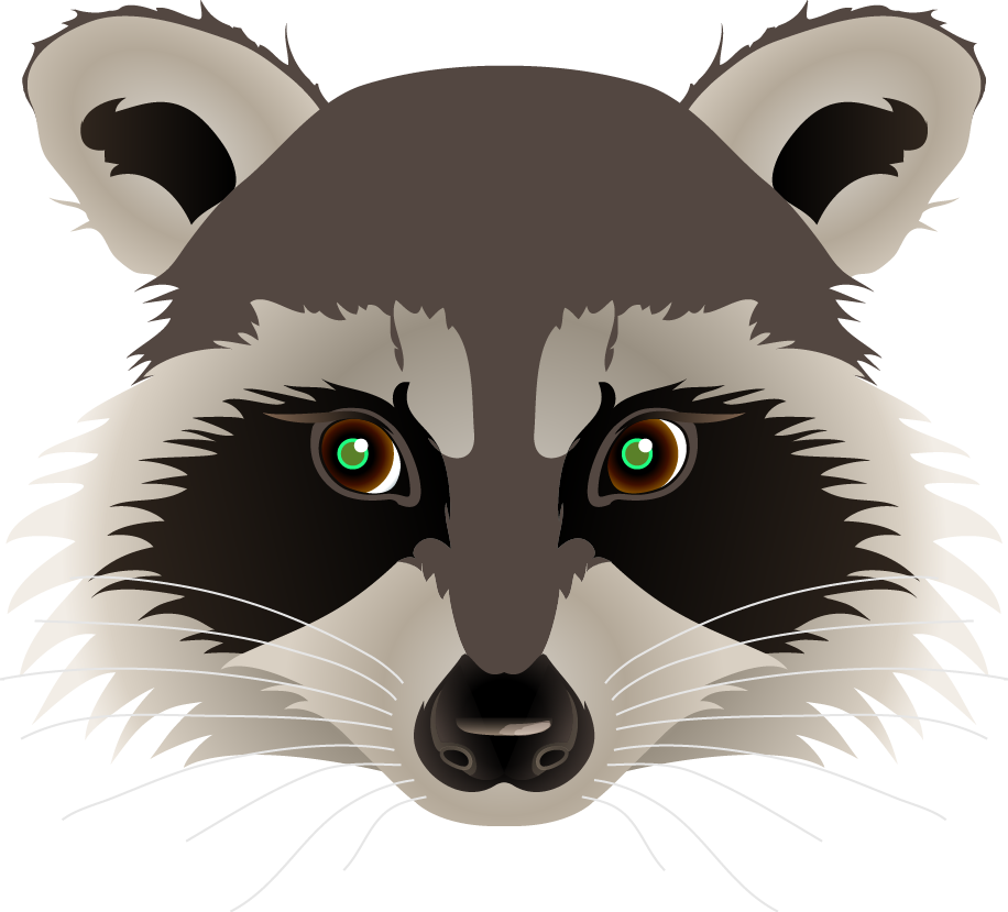 svg royalty free stock Raccoon Face Drawing at GetDrawings