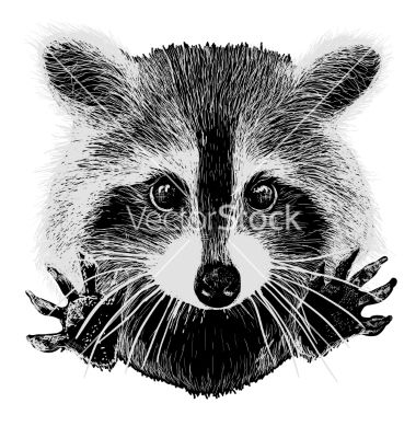 clip free stock Hand drawn raccoon tattoos. Racoon vector