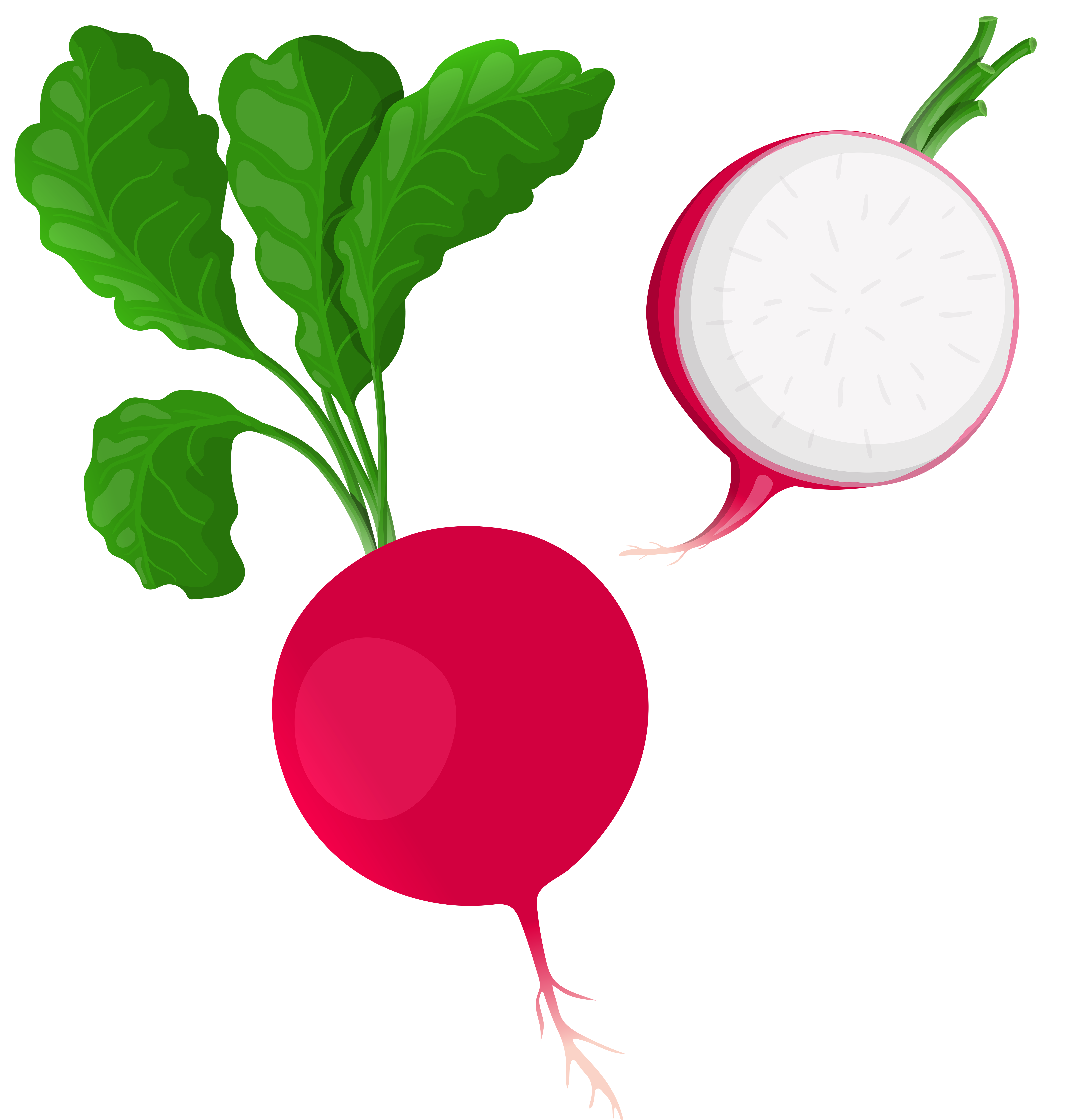 png freeuse download Radish clipart. Png clip art best.