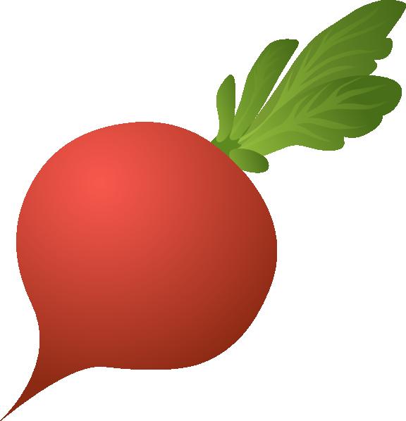 vector free stock Beet drawing radish. Clip art at clker