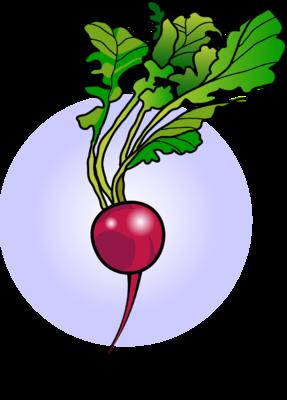 jpg library download Radish clipart. Image food clip art.