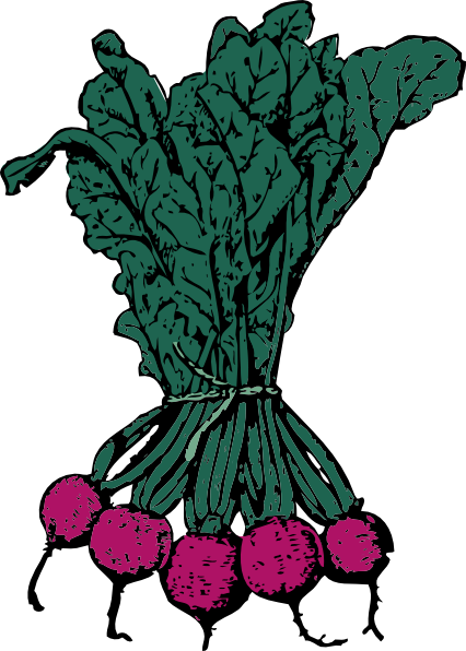 picture free Clip art at clker. Beets drawing