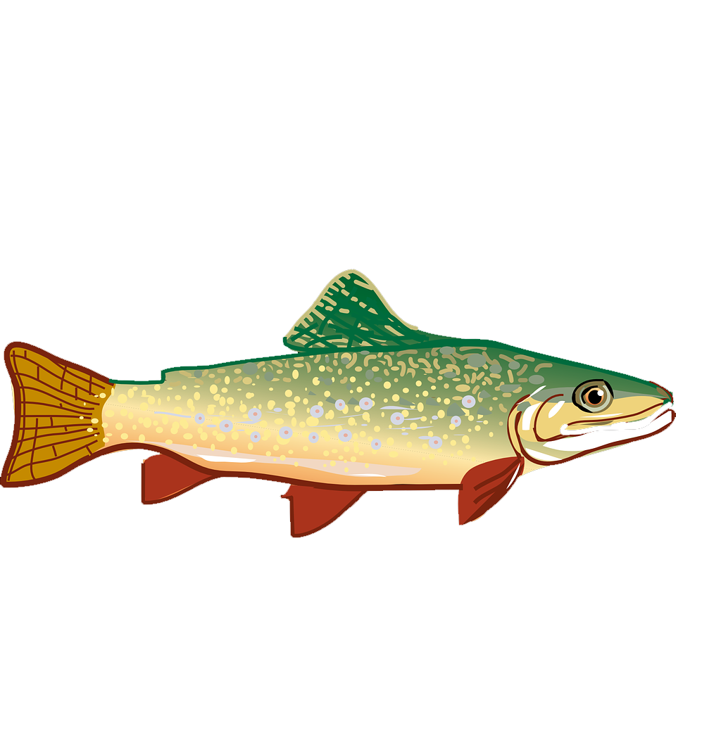 image royalty free library At getdrawings com free. Trout clipart rainbow trout