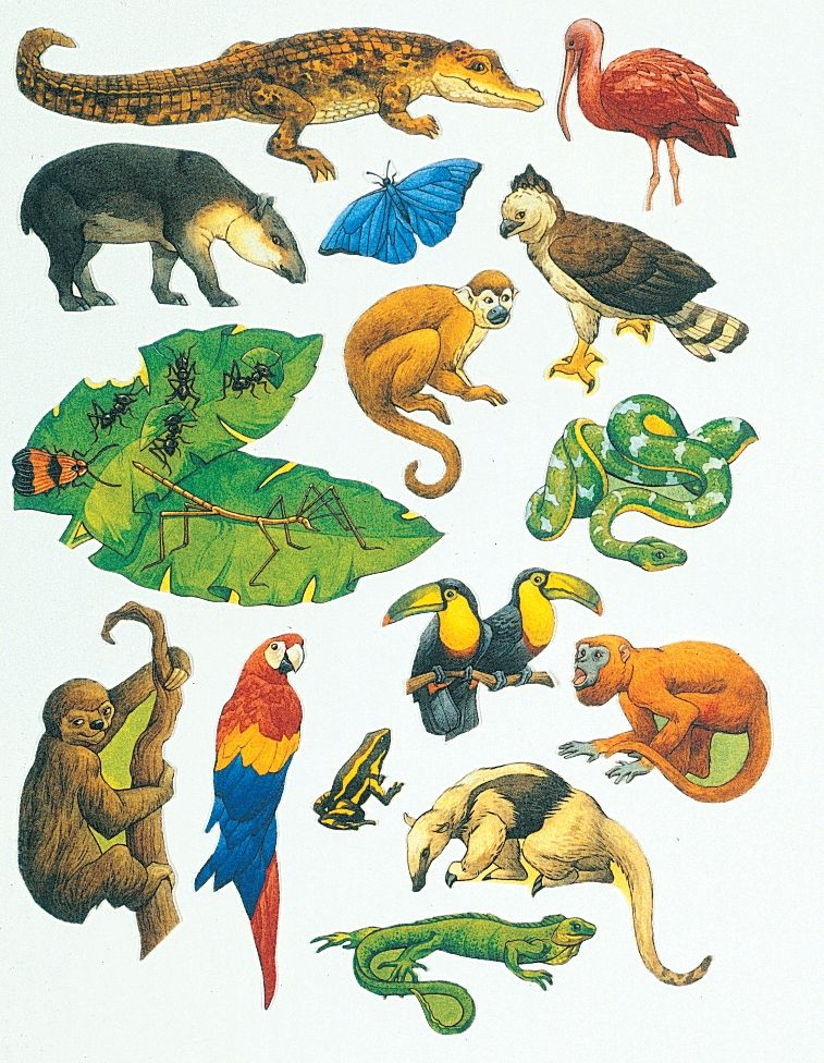 freeuse Rainforest animal clipart. Black and white clip