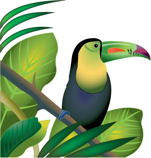 clip freeuse Rainforest clipart. Free tropical download clip