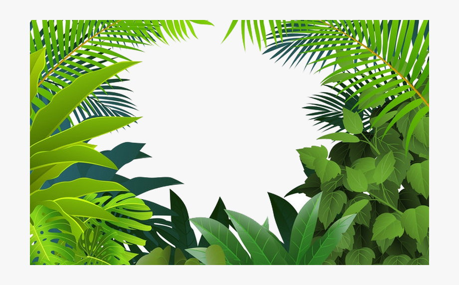vector freeuse Palm tree frames illustrations. Rainforest clipart