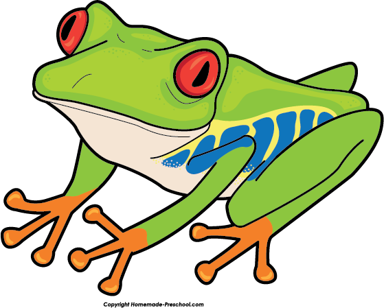 picture free download Rainforest clipart red eyed tree frog