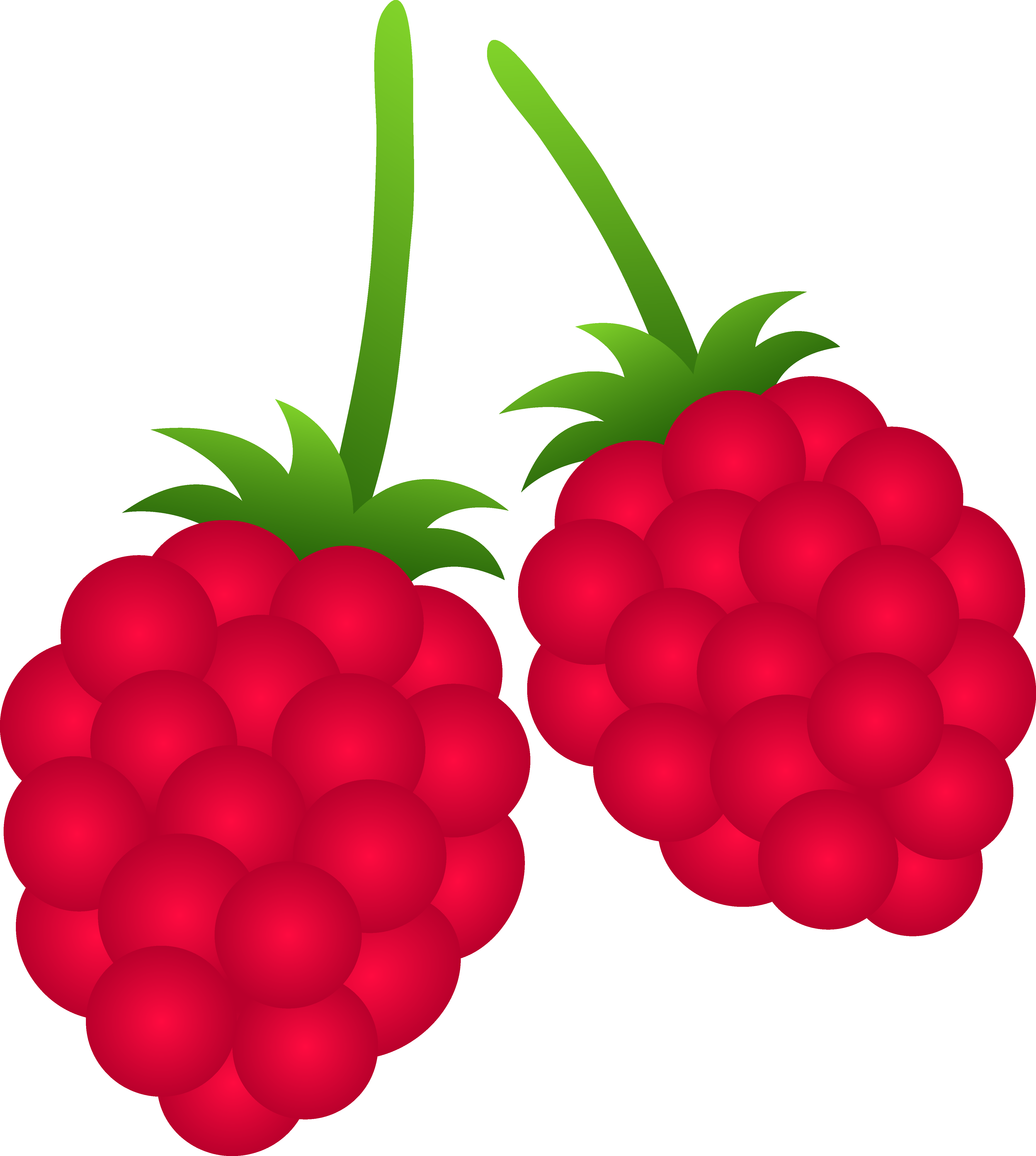 svg library stock Raspberry free . Berries clipart