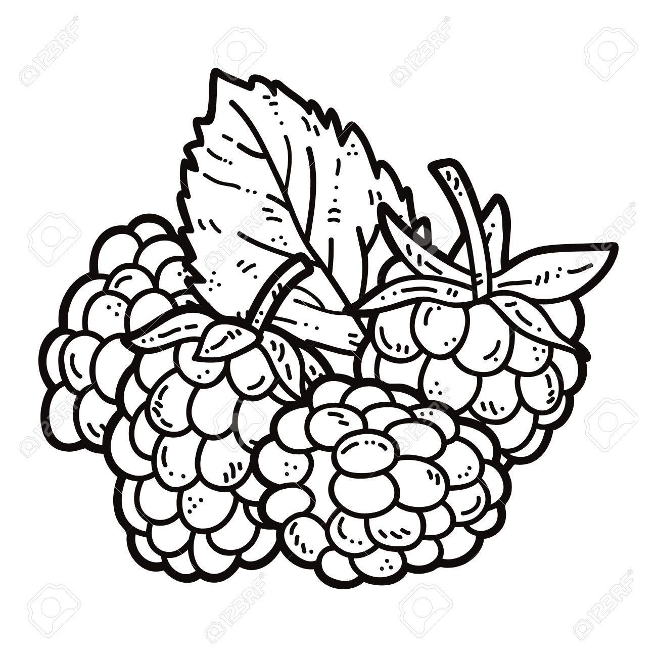 image royalty free download Blackberry drawing raspberry. Collection of clipart free