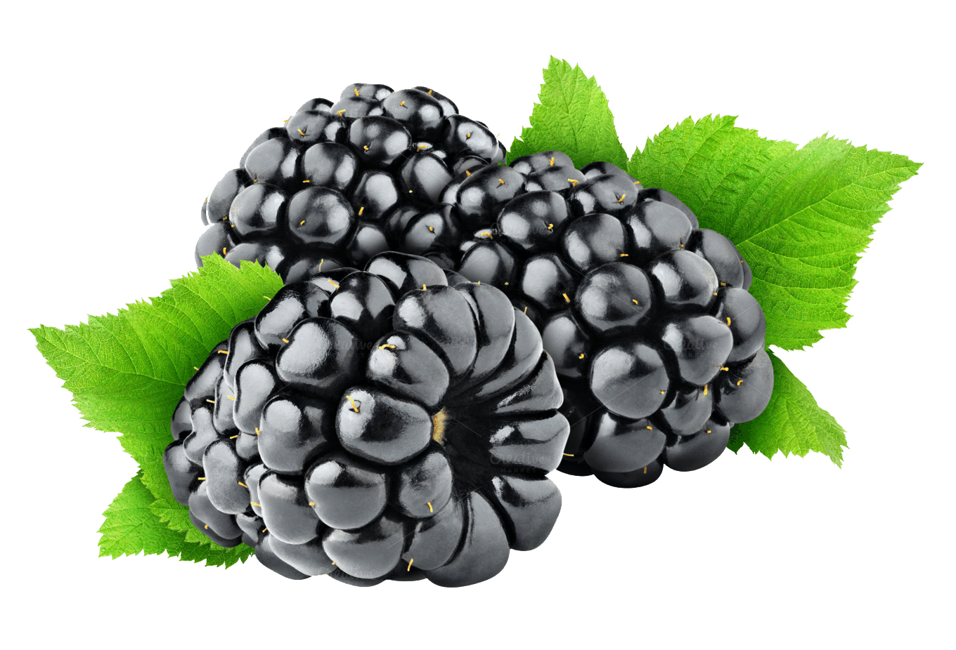 graphic black and white download Png . Blackberry drawing juicy