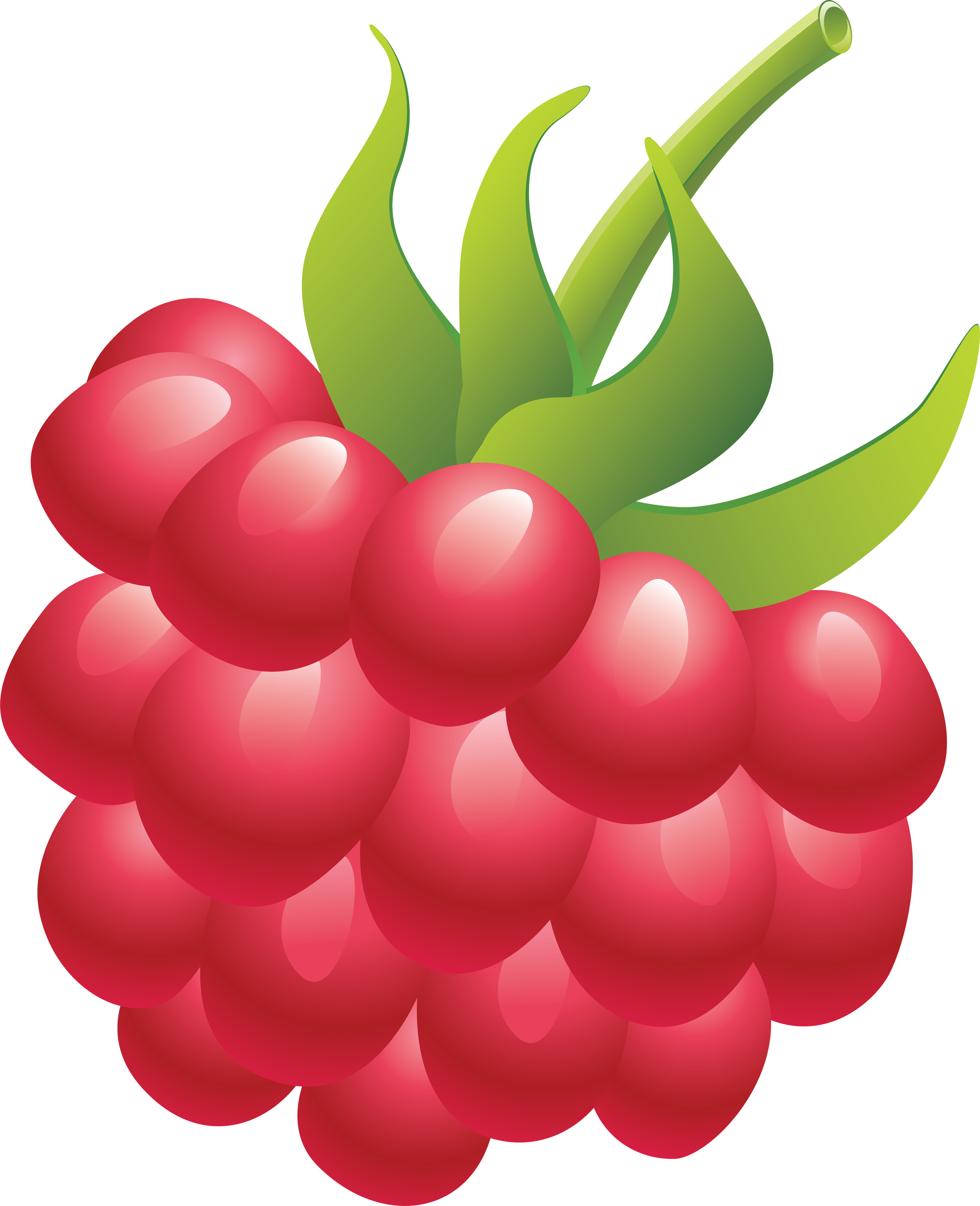 clip library library Raspberry PNG images free pictures download