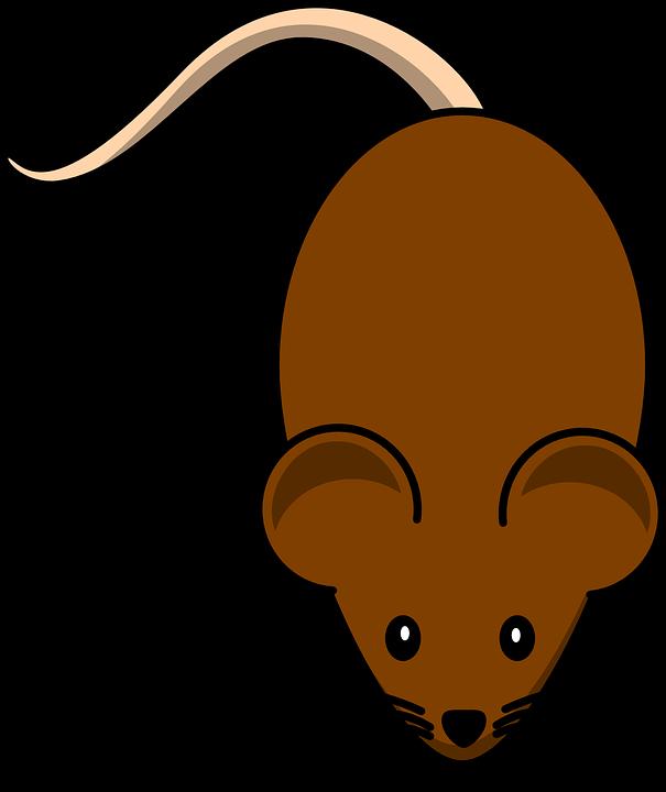 banner transparent Rat clipart. Tikus free on dumielauxepices.