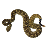 picture library download Download free png photo. Rattlesnake clipart.