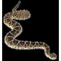 transparent Snake mask free on. Rattlesnake clipart.